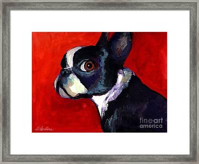 Boston Terrier Dog Portrait 2 Framed Print