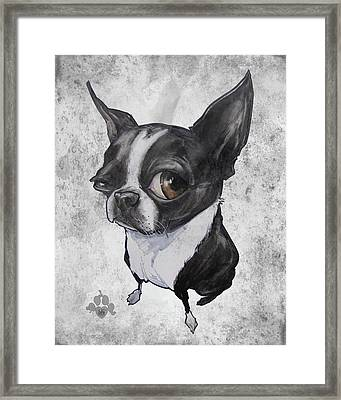 Boston Terrier - Grey Antique Framed Print