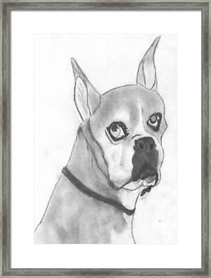 Boston Terrier Framed Print by Josh Bennett