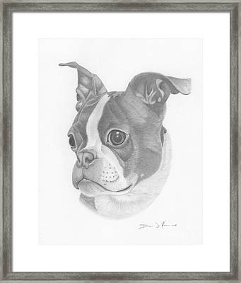 Boston Terrier Juno Framed Print