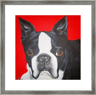 Boston Terrier Framed Print by Keran Sunaski Gilmore