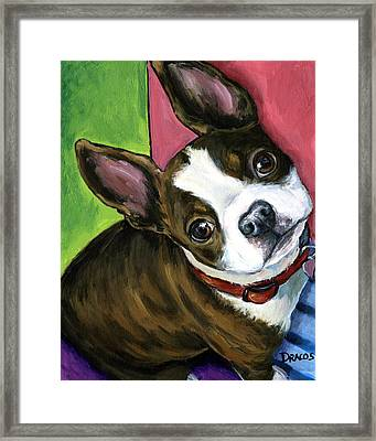 Boston Terrier Looking Up Framed Print by Dottie Dracos