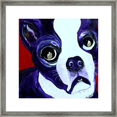 Boston Terrier- Lucy Framed Print by Laura  Grisham