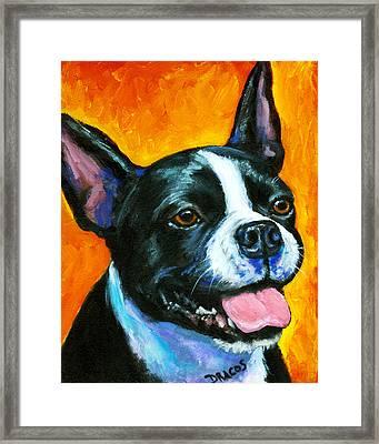 Boston Terrier On Orange Framed Print by Dottie Dracos