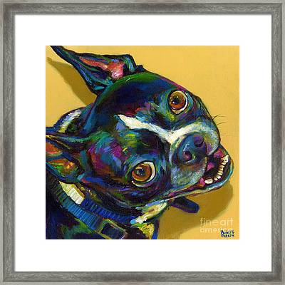 Boston Terrier Framed Print by Robert Phelps