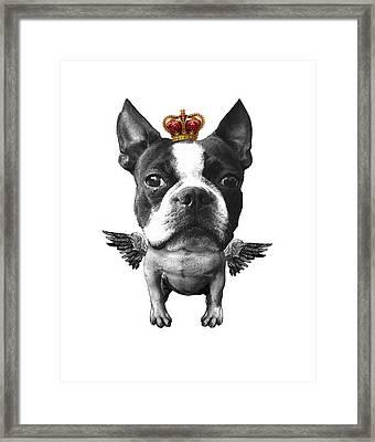 Boston Terrier, The King Framed Print by Madame Memento