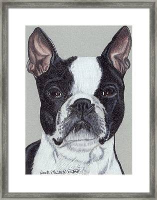 Boston Terrier Vignette Framed Print