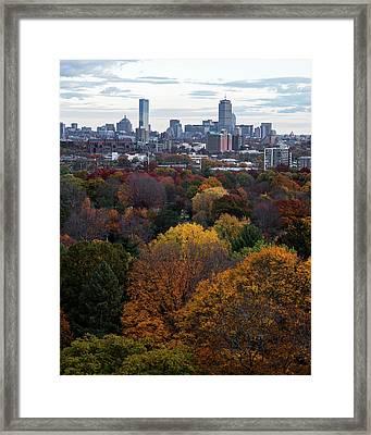 Boston Through The Autumn Trees Boston Ma Framed Print