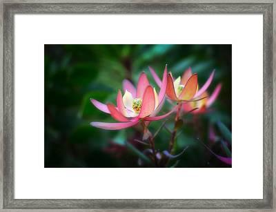 Botanic Garden Of Wales 1 Framed Print