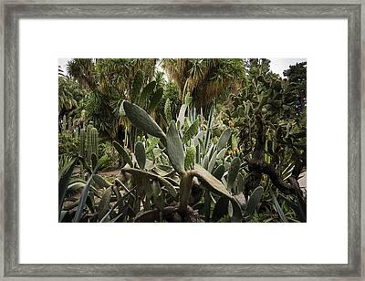 Botanic Garden Valencia Framed Print