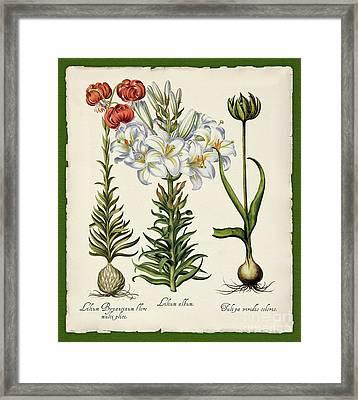Botanica Nostalgia IIi Botanical Study Framed Print by Tina Lavoie