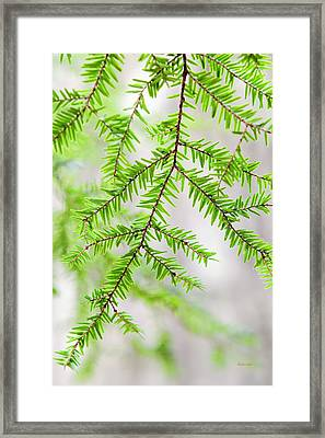 Framed Print featuring the photograph Botanical Abstract by Christina Rollo