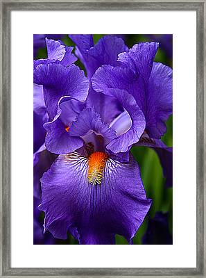 Botanical Beauty In Purple Framed Print by Toma Caul