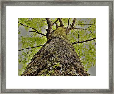 Botanical Behemoth Framed Print