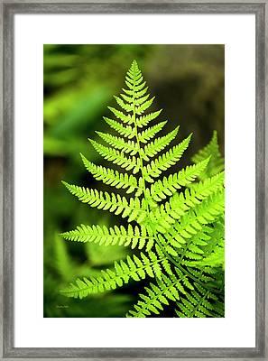 Botanical Fern Framed Print