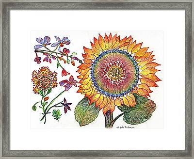 Botanical Flower-46 Sunflower Drawing Framed Print by Julie Richman