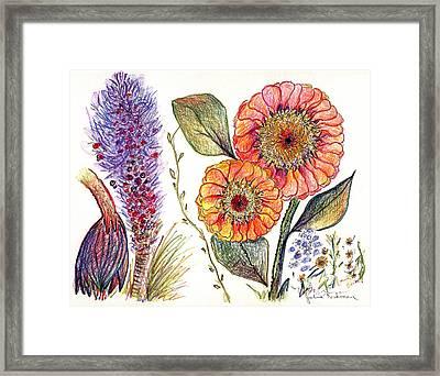 Botanical Flower-49 Framed Print by Julie Richman