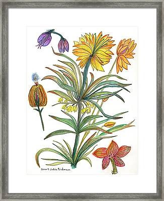 Botanical Flower-53  Yellow Flower Framed Print by Julie Richman