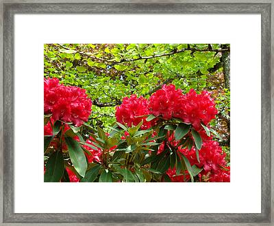 Botanical Garden Art Prints Red Rhodies Trees Baslee Troutman Framed Print by Baslee Troutman