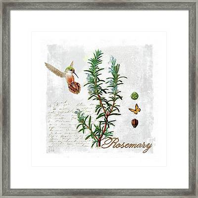 Botanical Illustration, Rosemary Herb Hummingbird Botany Framed Print by Tina Lavoie