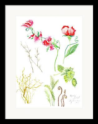 Pink Sweet Peas Framed Prints