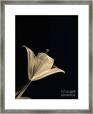 Botanical Study 3 Framed Print by Brian Drake - Printscapes