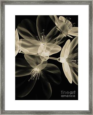 Botanical Study 4 Framed Print by Brian Drake - Printscapes