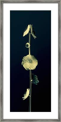 Botanical Study 6 Framed Print by Brian Drake - Printscapes