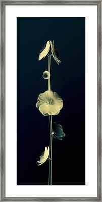 Botanical Study 6 Framed Print