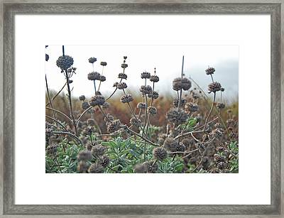 Botanical Towers Framed Print by Jean Booth