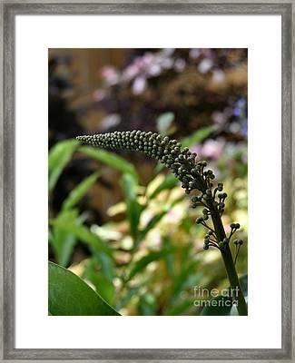 Botany 101 Framed Print by Kathy Daxon