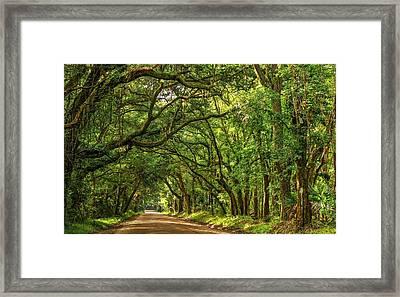 Botany Bay Edisto Island South Carolina Road Light And Shadow Framed Print by Carol R Montoya