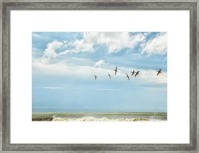Botany Bay Pelicans Framed Print by Gestalt Imagery