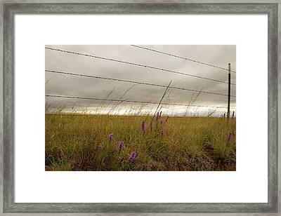 Bottle Brush Framed Print by Chris Harris