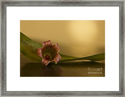 Bottle Tree Flower Framed Print