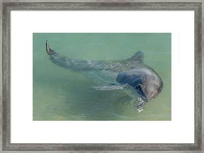 Bottlenose Dolphin Framed Print by Martin Capek