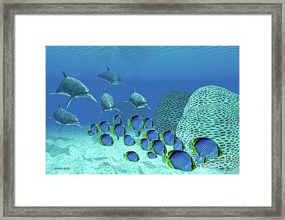 Bottlenose Dolphins Underwater Framed Print by Corey Ford