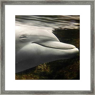 Bottlenose Framed Print by Luigi Masella