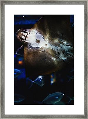 Bottom Of A Ray Fish Framed Print