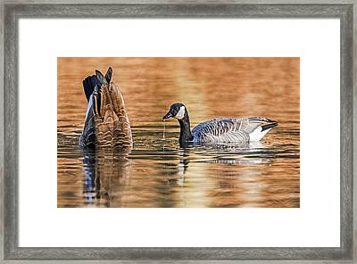 Bottoms Up Framed Print by SharaLee Art