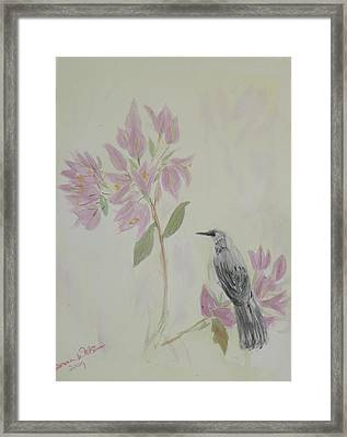 Bougainvillea And Mockingbird Framed Print