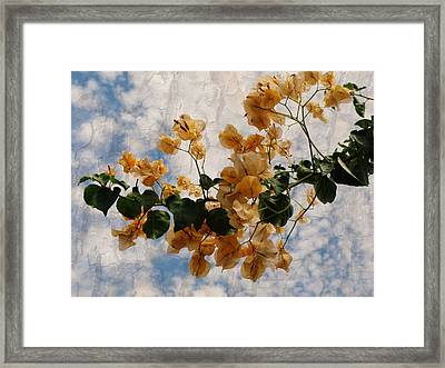 Bougainvillea Bloom Framed Print by Rose  Hill