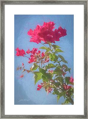 Bougainvillea Morning Framed Print