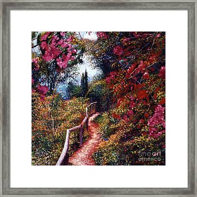 Bougainvillea Path Tuscany Framed Print by David Lloyd Glover