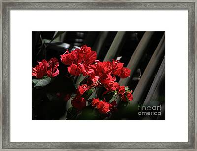 Framed Print featuring the photograph Bougainvilleas by Edward R Wisell