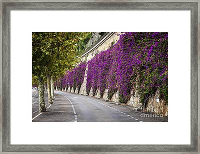 Bougainvilleas In Villefranche-sur-mer Framed Print