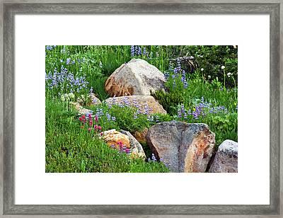 Boulder Blooms Framed Print