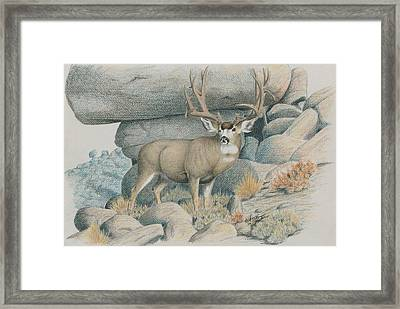 Boulder Buck  Framed Print