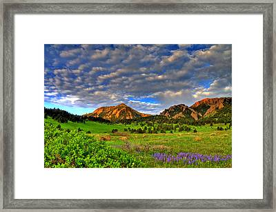 Boulder Spring Wildflowers Framed Print by Scott Mahon