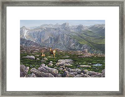 Boulderfield Bucks Framed Print